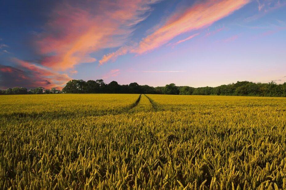 Foto panoramica de fazenda de producao agrícola - Pixabay